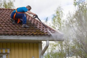 maintain roof